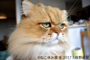 ねこ休み展 冬 2017