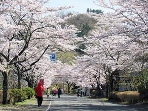 ふじおか桜まつり