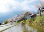 九華公園・宮川堤・三多気の桜など三重の桜の開花時期・見頃まとめ2017