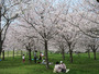 家族で行きたい!お花見+ピクニックが楽しめる桜スポット10選【九州】