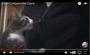いい加減諦めてくれ…!! ファスナーの仕組みを理解しちゃった子猫が母ちゃんを永遠に脱がしにかかる動画